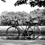Old bicycle in park Royalty Free Stock Images