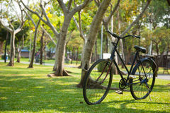 Old bicycle in the park. Stock Photo