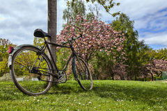 Old Bicycle in a Park in Spring. Old bicycle leaning against a tree in a park in spring Stock Photo