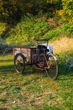 Old bicycle with three wheels used to transport freshly picked o stock photography