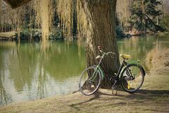 Old bicycle under a tree Stock Image
