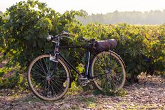 Old bicycle in a vineyard, at golden sunrise in Fontanars dels Alforins, small town in the province of Valencia, Spain royalty free stock images