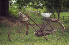 Old bicycle (Vintage Style Processing). An old bicycle is parked under the big tree (Vintage Style Processing royalty free stock images