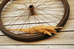 Old bicycle wheel Royalty Free Stock Photography