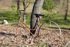 Old bicycle. An old bicycle without wheels, leaning on a tree Stock Images