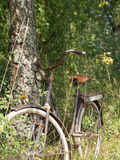 Old bicycle in the woods. Old bicycle leaning on a tree Royalty Free Stock Image