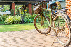 Old bicycles in the park. On sunny Royalty Free Stock Photos