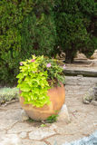 Old big clay pots with flowers, Balchik, Bulgaria Royalty Free Stock Photography
