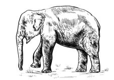 Old big elephant on the white background. Vector vector illustration