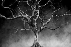 Old Big Giant Tree alone on fog and smoke background Royalty Free Stock Photography