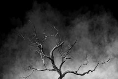 Old Big Giant Tree alone on fog and smoke background Stock Photos