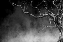 Old Big Giant Tree alone on fog and smoke background Stock Photography