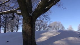 Old big oak  in winter on snow and camera rotate. Old big oak trunk in winter on snow and camera rotate stock footage