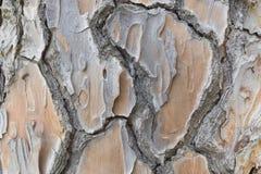 Old big pine tree bark Royalty Free Stock Photos