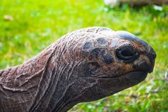 Turtle on green grass stock image