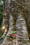 Old Big Tree with Colorful Fabrics Stock Image