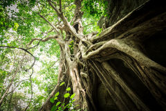 Old big tree royalty free stock photography
