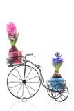 Old bike with colorful Hyacinths Royalty Free Stock Image