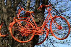 Old bike. Hanging on a tree, extreme driving Royalty Free Stock Images