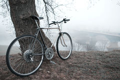 Old bike near the tree Royalty Free Stock Photo