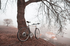 Old bike near the tree Royalty Free Stock Images