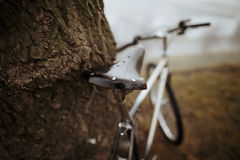 Old bike near the tree Royalty Free Stock Photo