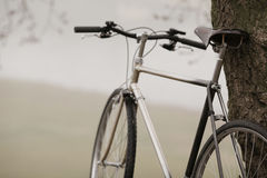 Old bike near the tree Royalty Free Stock Photography