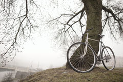 Old bike near the tree Stock Images