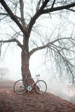 Old bike near the tree Royalty Free Stock Image
