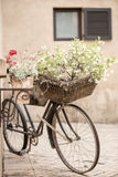 Old Bike Planter Royalty Free Stock Image