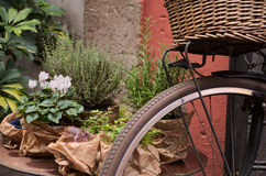 Old bike. In a street of Rome Royalty Free Stock Images