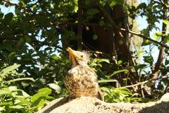Old Bird before die. Looking to blue sky stock photo