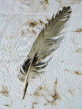 Old bird feather Stock Images