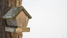 Old bird feeder in the pinewood. With blurry white background. Picture was taken in winter Stock Photography