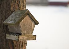 Old bird feeder in the pinewood. With blurry white background. Picture was taken in winter Royalty Free Stock Photo