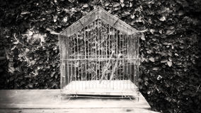 Old birdcage. To the outdoor Royalty Free Stock Photography