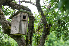 Old birdhouse Stock Images