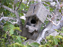 Old birdhouse on the tree figs. Old birdhouse with cracked roof.in the leaves of a fig Royalty Free Stock Images