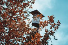Old birdhouse and yellow leaves royalty free stock photo