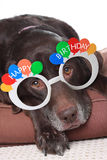 Old Birthday dog royalty free stock photography