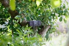 Old black cassette tape recorder. Retro old black cassette tape recorder on the green tree Stock Photos