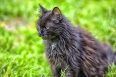 Old black cat in grass Royalty Free Stock Photo