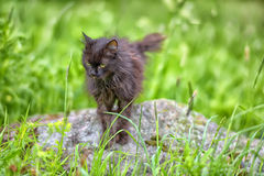 Old black cat in grass Royalty Free Stock Photos