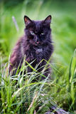 An old black cat Royalty Free Stock Photos