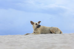 Old black dog relax on the beach Royalty Free Stock Photos