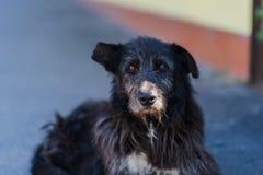 Old black homeless dog lies on street stock photos
