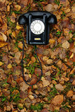 Old black phone. Old phone on autumn leaves Royalty Free Stock Image