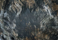 Old black wood texture (for background) Royalty Free Stock Photos