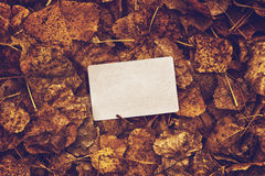 Old blank business card in autumn leaves Royalty Free Stock Photos