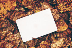 Old blank business card in autumn leaves Stock Images